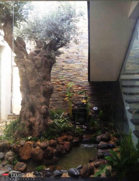 עץ הזית במרכז הפטיו
